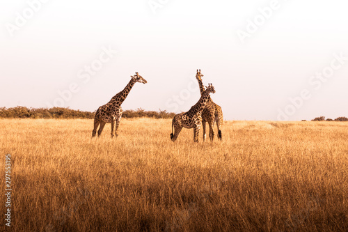 African safaris and Landscapes Wallpaper Mural