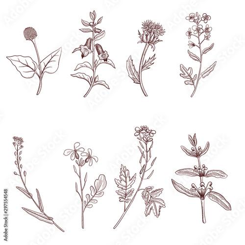 Fotografia vector drawing plants
