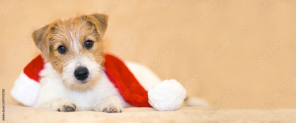 Christmas happy pet dog puppy with santa hat, web banner with copy space