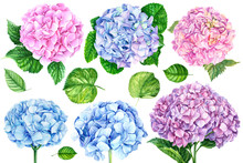 Set Of Hydrangea Flowers And L...