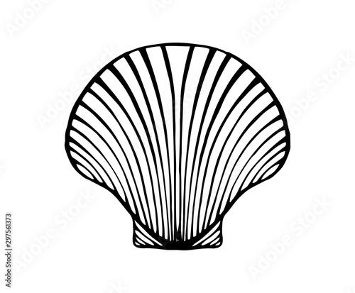 Fotomural vintage hand drawn line art shell engraved