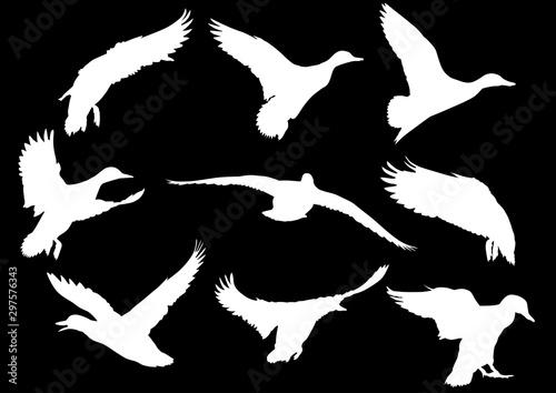 Valokuva nine flying ducks white silhouettes on black