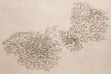 Abstract Natural Sandy Pattern