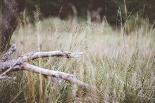 Closeup Shot Of A Broken Tree Branch Fallen Into A Dry Grassy Field With A Blurred Background