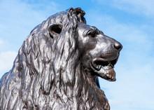 Lion, Trafalgar Square
