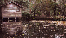 An Abandoned Boat Shack Surrounded By Trees And Ferns With Reflection Of  On The Water. Located In Sherbrooke, VIC, Australia. The Autumn Season Gives Sepia Tint To The Image. Suitable For Halloween T