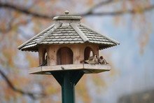 Beautiful Goldfinch On A Bird House In Autumn