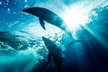 泳ぐイルカのシルエット