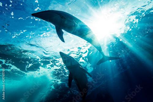 泳ぐイルカのシルエット Fototapet