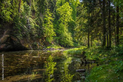 Autocollant pour porte Rivière de la forêt river in the forest