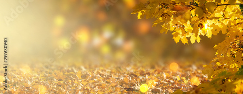 Foto auf Gartenposter Gelb Decorative autumn banner decorated with branches with fall golden yellow maple leaves on background of orange autumnal foliage and shiny glowing bokeh, place for your text, indian summer in park