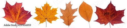 Foto Set of autumn leaves isolated on white background
