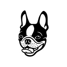 Boston Terrier Dog - Vector Il...