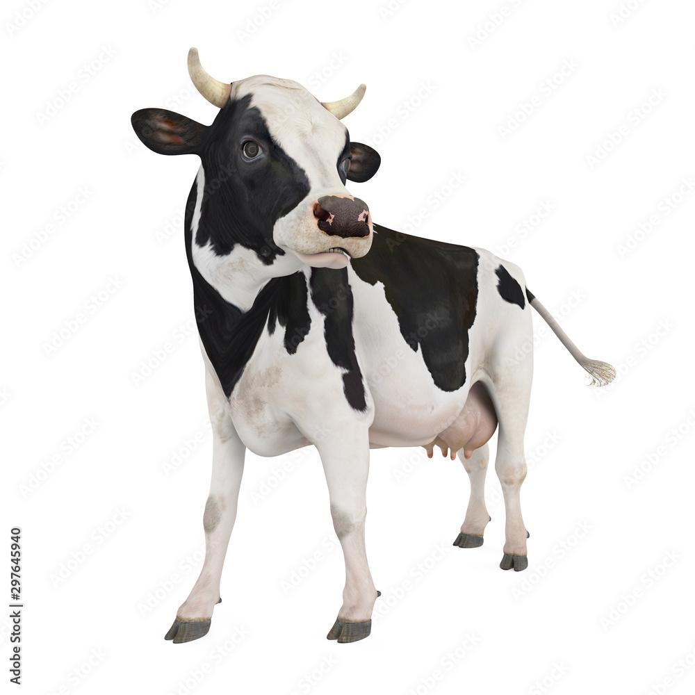 Fototapeta Cow Isolated