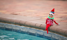 Christmas Elf Lounging By The ...