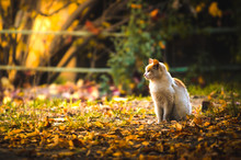 Cat With An Edge On An Autumn Background
