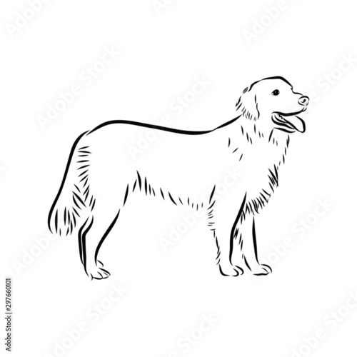 silhouette of dog isolated on white background, golden retriever sketch Fototapet
