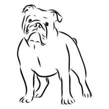 Vector Illustration Of A Dog, English Bulldog Sketch
