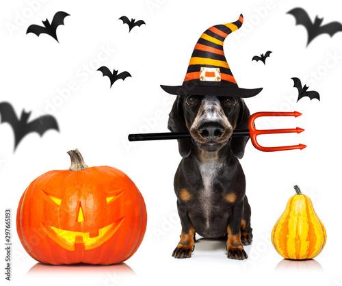 Foto op Plexiglas Crazy dog halloween ghost dog trick or treat