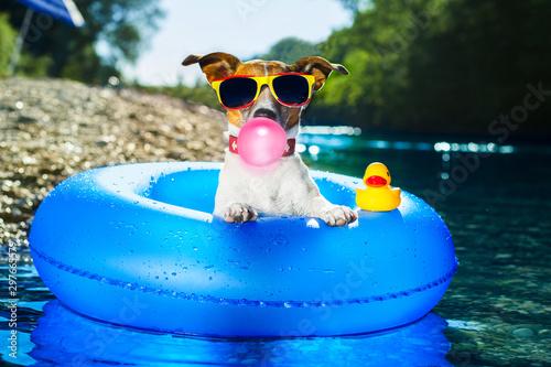 Foto op Plexiglas Crazy dog beach dog