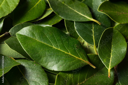 Raw Green Organic Bay Leaves