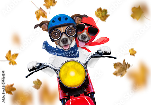 Tuinposter Crazy dog motorcycle dog on autumn or fall