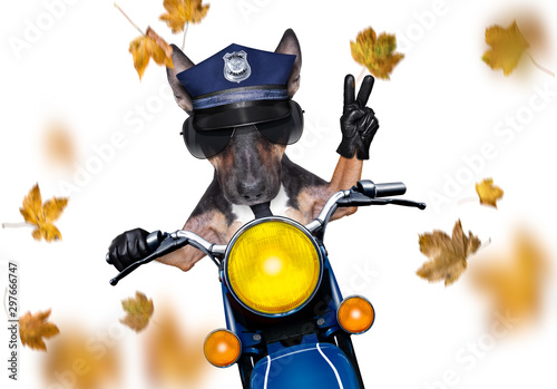 Tuinposter Crazy dog motorcycle police dog on autumn or fall