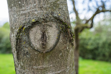 A Knothole On A Trimmed Tree T...