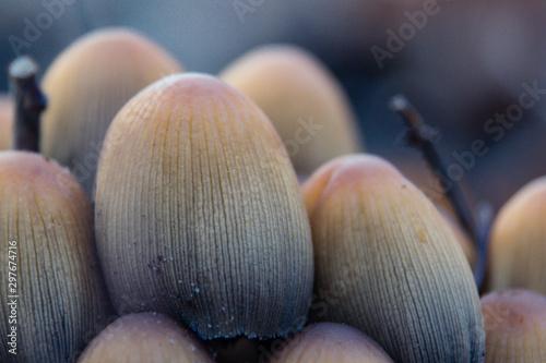 Wallpaper Macro Photography mushroom/ Nahaufnahme/ Makro Fotografie Pilze  - 297674716