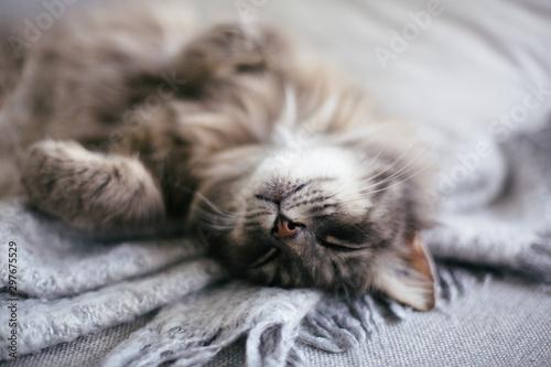 Photo  Sleeping cat