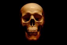 Human Skull Isolated On Black ...