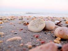 Sand Dollar, Exmouth Western A...