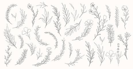Plant nature hand drawn set. Collection botanical element.Elegante vintage st...
