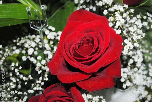 Close downward shot of a red rose, with Baby's breath flowers in