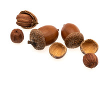 A Pile Of Acorns Isolated On A...