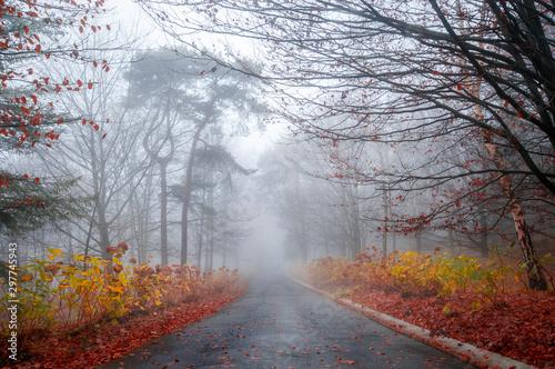 niebla monte carreteras de montaña Monte Ulia Canvas Print