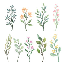 Set Of Branches With Leaves. V...