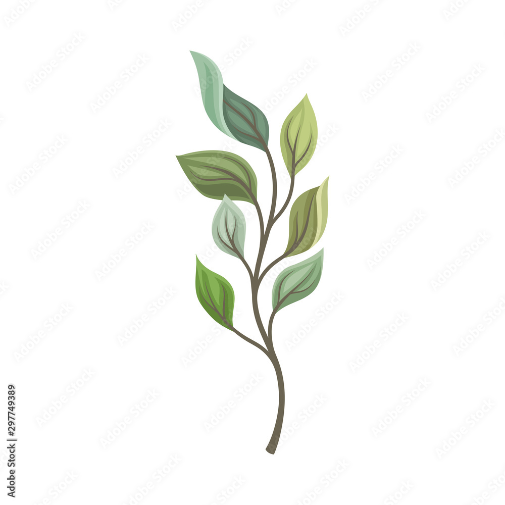 Fototapety, obrazy: Leaves of different shades on a thin stalk. Vector illustration on a white background.