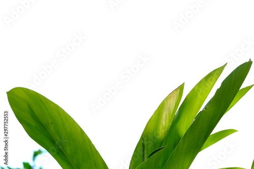 Photo Tropical coconut tree leaves on white isolated background for green foliage back