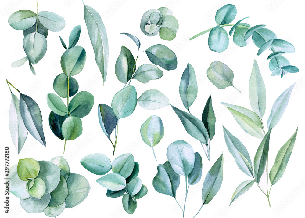 Fototapety, obrazy: set of eucalyptus leaves on a white background, watercolor illustration