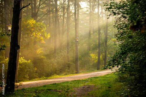 Obraz na plátne  forest at the Baltic coast in Poland with light beams