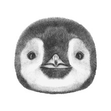 Portrait Of Penguin. Hand-draw...