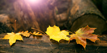 Maple Leaves On Tree Trunk Wit...