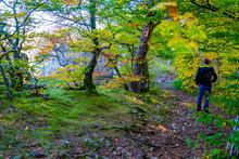 Donautal Im Herbst