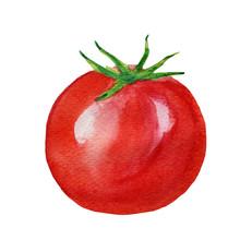 Watercolor Hand Drawn Red Ripe Tomato