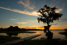Daybreak At A Central Florida Lake With A Dramatic Cypress Tree Draped In Spanish Moss.
