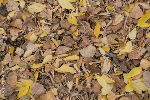 Canvas Print Various fallen leaves on the ground in autumn