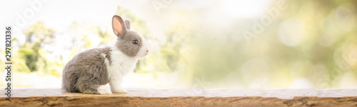 Leinwand Poster The rabbit sit on the wood with light bokeh form nature background