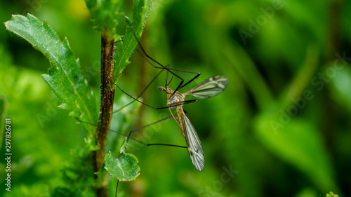 Fotografiet Insekten