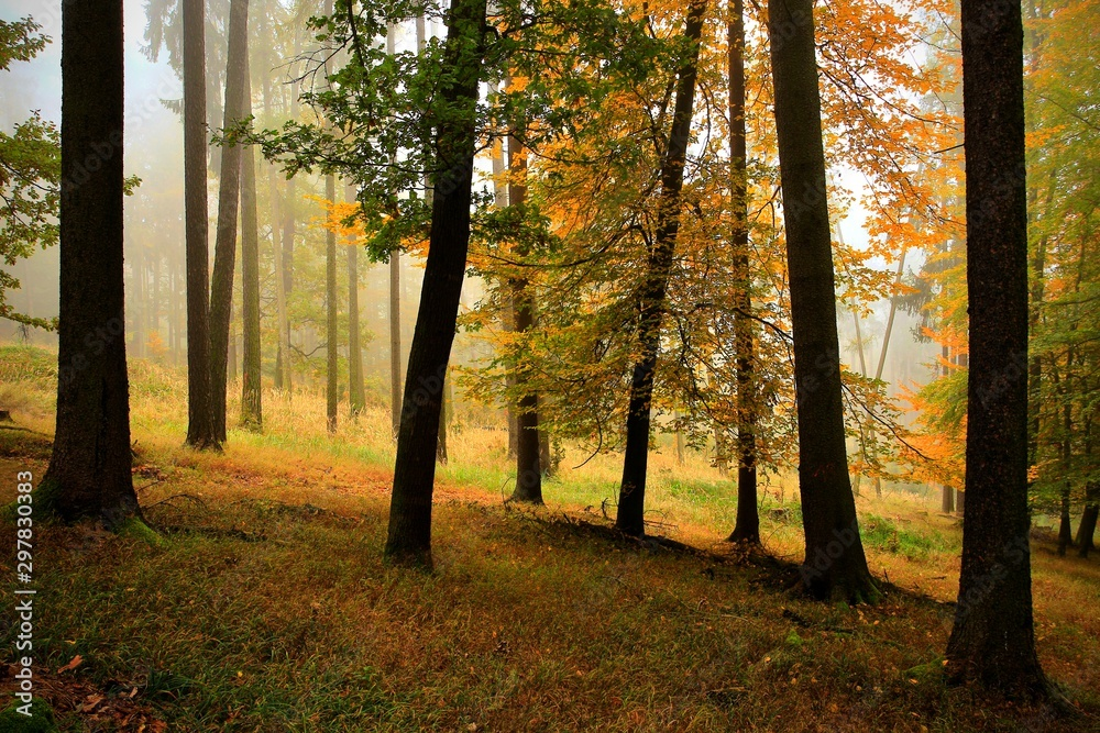 Fototapety, obrazy: Morning summer forest with sun rays.